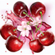 Cherries and Flower on Transparent - GraphicRiver Item for Sale