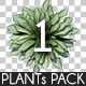 Top View Plants Pack 1 - GraphicRiver Item for Sale