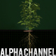 3D Growing Plant - Soybean - VideoHive Item for Sale