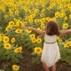 Happy Little Girl on the Field of Sunflowers in Summer - VideoHive Item for Sale