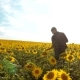 Man Farmer Exploring the Field with Sunflowers.  Video. Man Lifestyle Farmer Hand Hold Bottle o - VideoHive Item for Sale