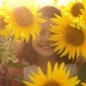 Happy Portrait Little Girl on the Field of Sunflowers in Summer - VideoHive Item for Sale