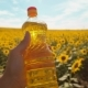 Farmer Holding a Plastic Bottle of Sunflower Oil in His Hand Field Sunlight Lifestyle - VideoHive Item for Sale