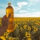 Man Farmer Exploring the Field with Sunflowers - VideoHive Item for Sale