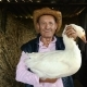 An Elderly Farmer in a Straw Hat Is Holding a Live White Goose. Portrait of a Man with a White Goose - VideoHive Item for Sale