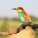 Pair of Colored Bird Flies and Sits on a Branch - VideoHive Item for Sale