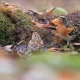 Wild Singing Birds Drink Water in the Autumn Forest - VideoHive Item for Sale