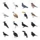 Bird Species - GraphicRiver Item for Sale