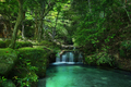 stream waterfall in a mossy tropical forest - PhotoDune Item for Sale