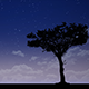 Tree Silhouette at Night - VideoHive Item for Sale