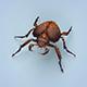 Fantasy Monster Bug - 3DOcean Item for Sale