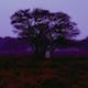 Symbiosis - AudioJungle Item for Sale