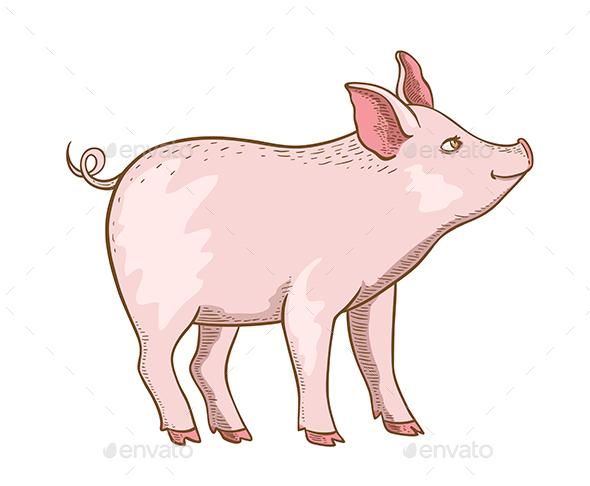 Pink Little Pig