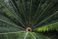Top view of big palm leafs - PhotoDune Item for Sale