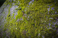 Moss growing on large rock - PhotoDune Item for Sale