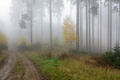 Forest road in the autumn foggy woodland - PhotoDune Item for Sale