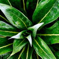 Green background. Plant lover concept - PhotoDune Item for Sale