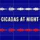 Cicadas at Night