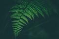Fresh fern macro image. Horizontal orientation. - PhotoDune Item for Sale