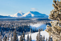 Taiga winter snow landscape Yukon Territory Canada - PhotoDune Item for Sale