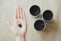 womans hand holding basil plant seeds over metallic pot with soil - PhotoDune Item for Sale