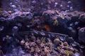 aquarium with colorful fishes - PhotoDune Item for Sale