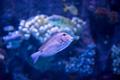 fish swimming in aquarium - PhotoDune Item for Sale