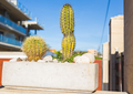 Decoration, nature and village concept - Cactuses in a flower pot, beautiful decoration in garden - PhotoDune Item for Sale