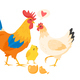 Chicken Family - GraphicRiver Item for Sale