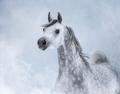 Arabian horse in light smoke. - PhotoDune Item for Sale