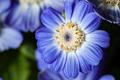 Blue Flower - PhotoDune Item for Sale