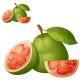 Guava Fruit - GraphicRiver Item for Sale