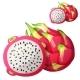 Dragon Fruit - GraphicRiver Item for Sale