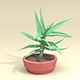 Low-Poly Aloe Plant - 3DOcean Item for Sale