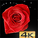 Exploding Rose - VideoHive Item for Sale