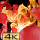 Rose Petals on Fire - VideoHive Item for Sale