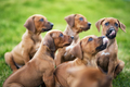 Puppies waiting for food - PhotoDune Item for Sale
