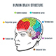 Human Brain Structure - GraphicRiver Item for Sale