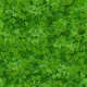 Seamless Green Foliage Pattern - GraphicRiver Item for Sale