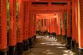 Torii gates in Fushimi Inari in Kyoto - PhotoDune Item for Sale
