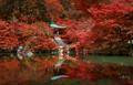 autumn foliage at Daigo ji temple, Kyoto, Japan - PhotoDune Item for Sale