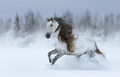 Gray long-maned Spanish horse galloping during snowstorm. - PhotoDune Item for Sale