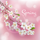 Blossoming Tree Branches Spring Template - GraphicRiver Item for Sale