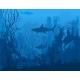 Blue Underwater Landscape - GraphicRiver Item for Sale