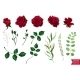 Vector Roses - GraphicRiver Item for Sale