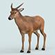 Realistic Wollaton Deer - 3DOcean Item for Sale
