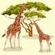 Cartoon Giraffes Eating Foliage of Acacia Trees - GraphicRiver Item for Sale