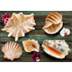 Shell Background - GraphicRiver Item for Sale