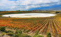 Autumn Vineyards and dry Carralogrono lake with Laguardia village at background, Spain - PhotoDune Item for Sale