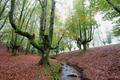 Otzarreta beech forest, Basque Country, Spain - PhotoDune Item for Sale
